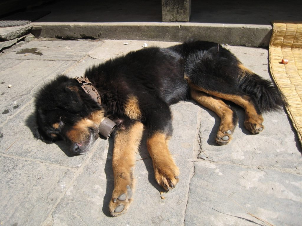 茶屋の犬 2007 ジョムソン・トレッキング