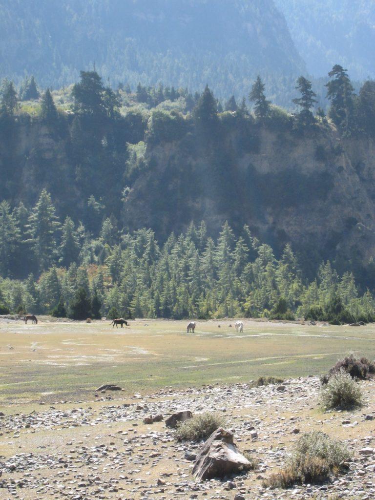 馬の放牧 2007 ジョムソン・トレッキング