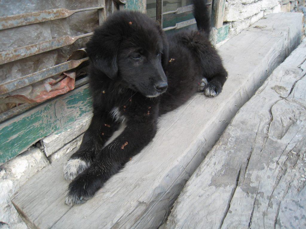 コパンの犬 2007 ジョムソン・トレッキング