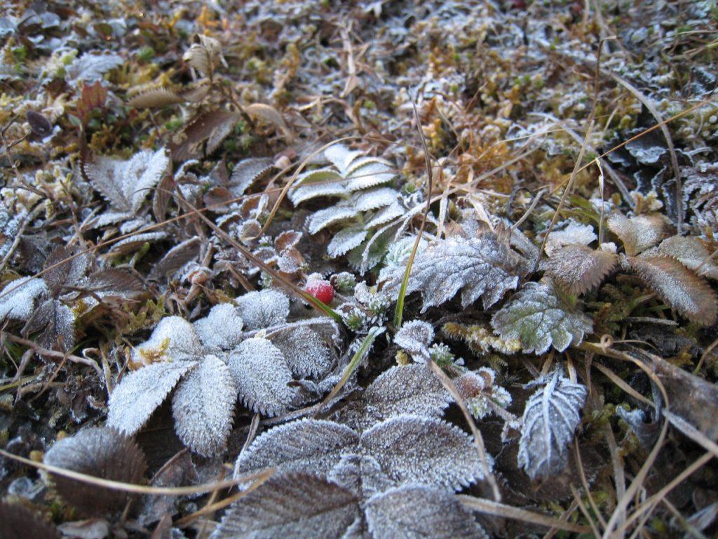 霜が降りている 2007/08 デウラリ・トレッキング