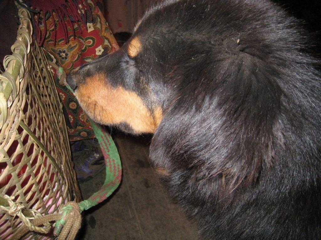 母犬は温厚 2007/08 デウラリ・トレッキング