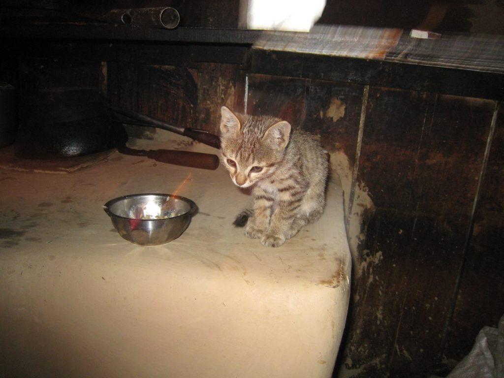猫が飼われていた 2007/08 デウラリ・トレッキング