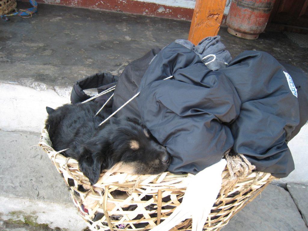 犬はドコに入れて運ぶ 2007/08 デウラリ・トレッキング