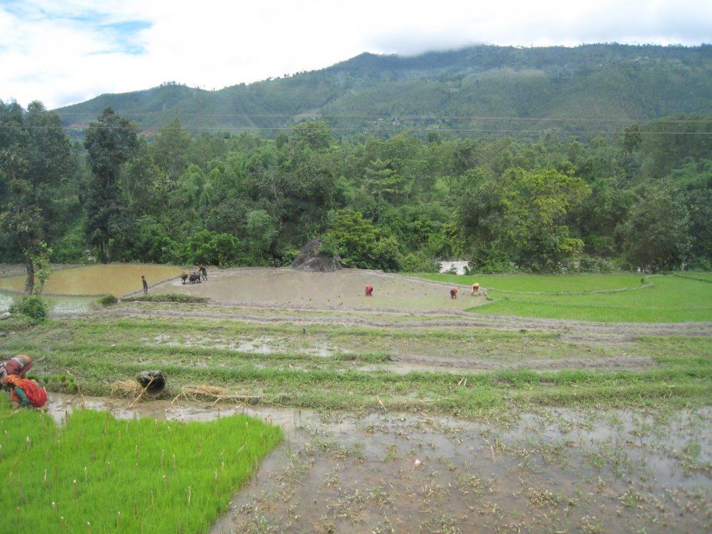 田植えが始まっていた 2008 ランタン・トレッキング