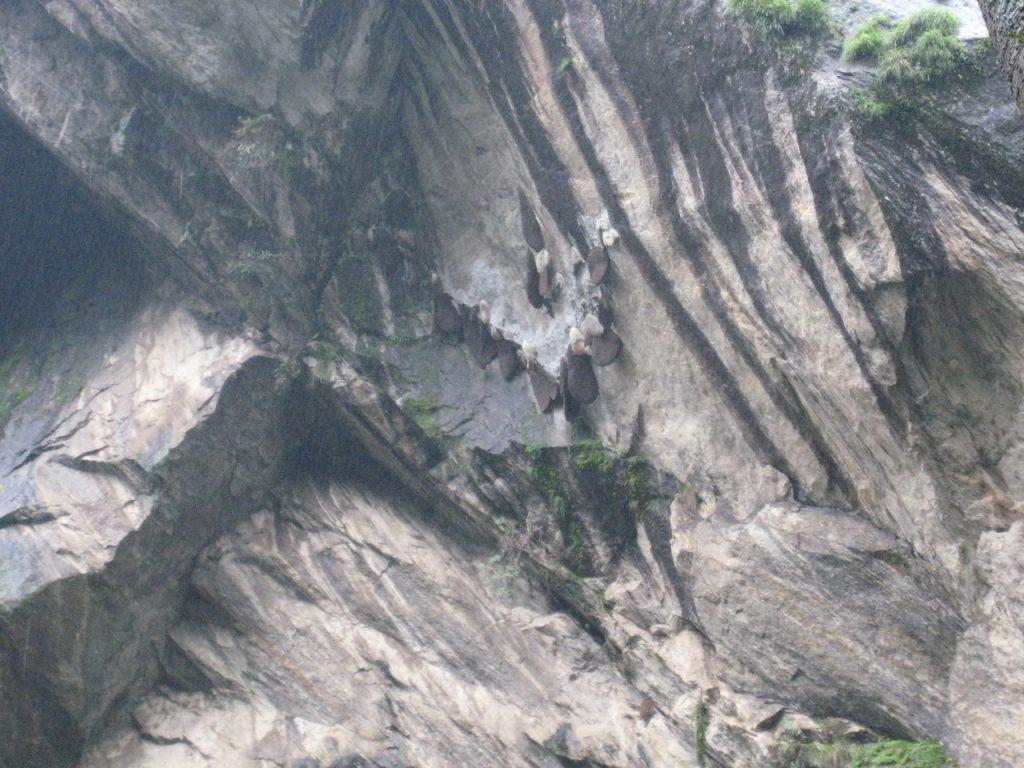 ミツバチの巣 2008 ランタン・トレッキング