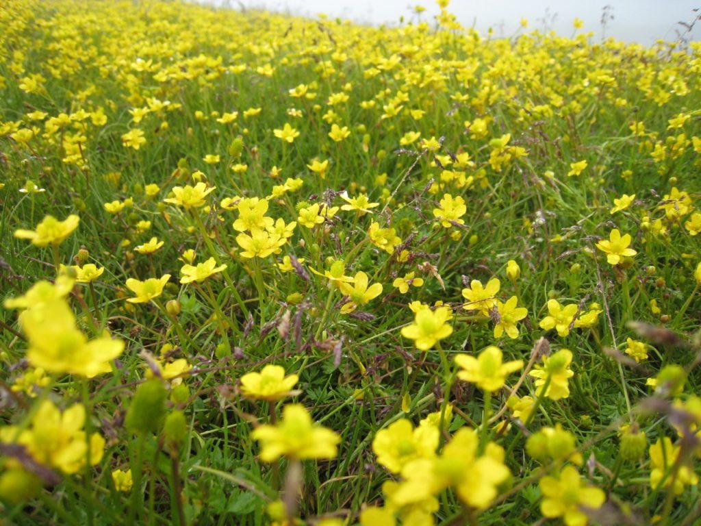 お花畑、標高4200m位 2008 ランタン・トレッキング
