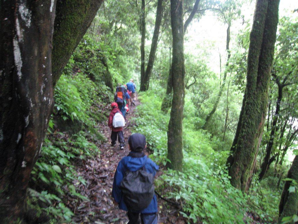 森の中を進む (バンブー〜パイロ間) 2008 ランタン・トレッキング