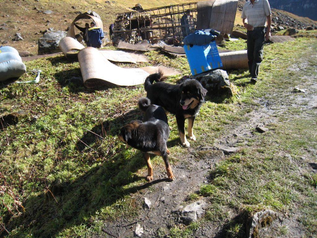 羊飼いの家族と牧羊犬 2008 アンナプルナ・ベースキャンプ・トレッキング