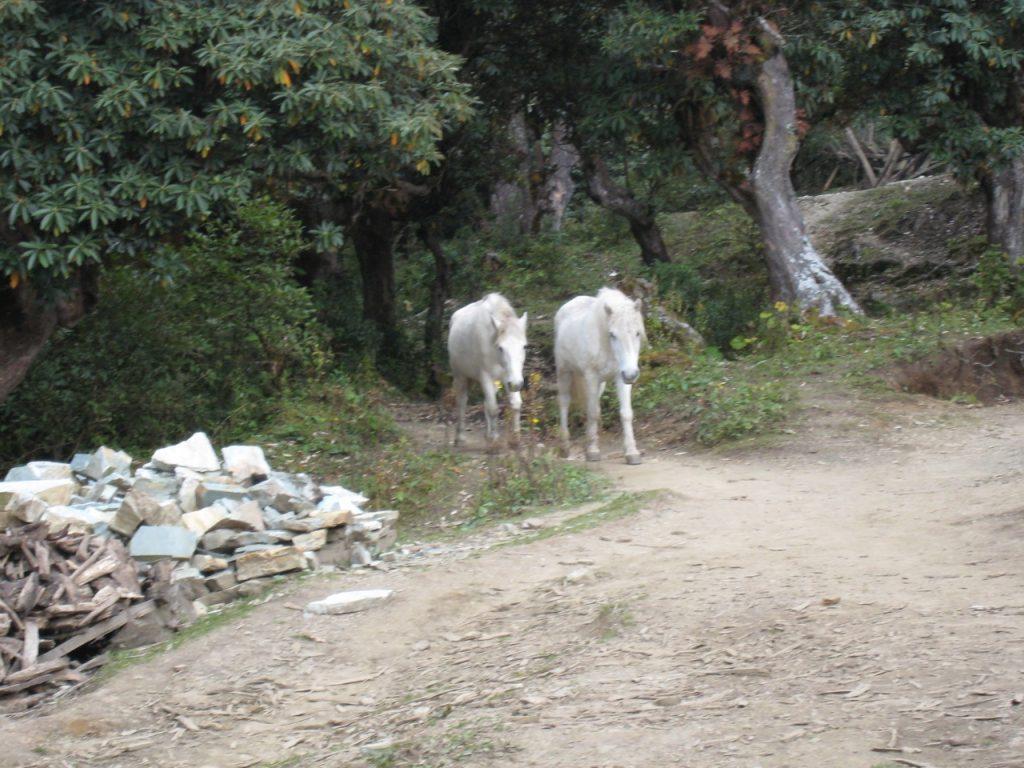 ゴレパニの馬 2008 アンナプルナ・ベースキャンプ・トレッキング