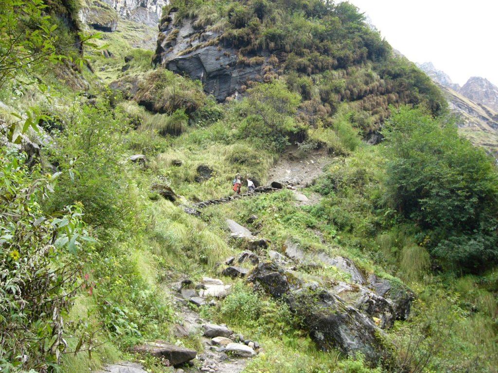 デオラリが近づき林が終わる 2008 アンナプルナ・ベースキャンプ・トレッキング