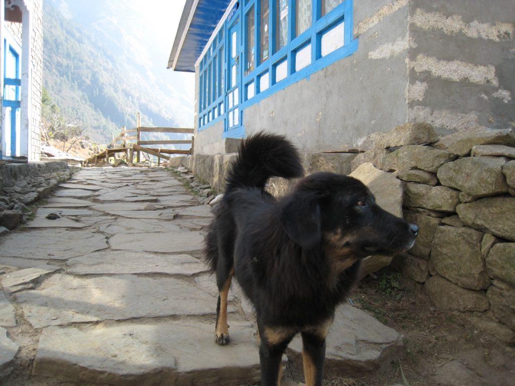途中で会った犬 2009 ナムチェ・バザール・トレッキング