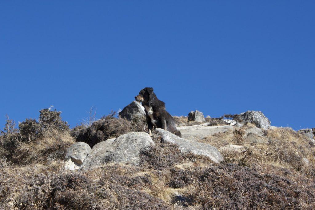 シャンボチェへの石段 2010/11 ナムチェ・バザール・トレッキング
