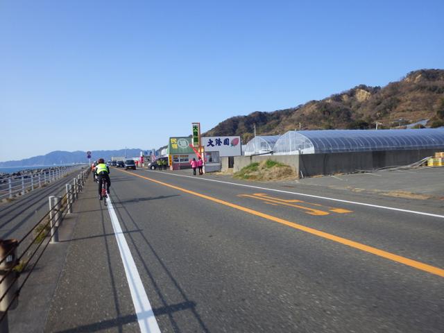 いちご娘さんたち BRM104静岡200km (2015年1月4日)
