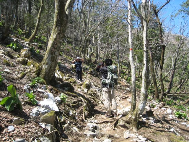 視界が開けて来た 藤原岳 -2013年4月28日