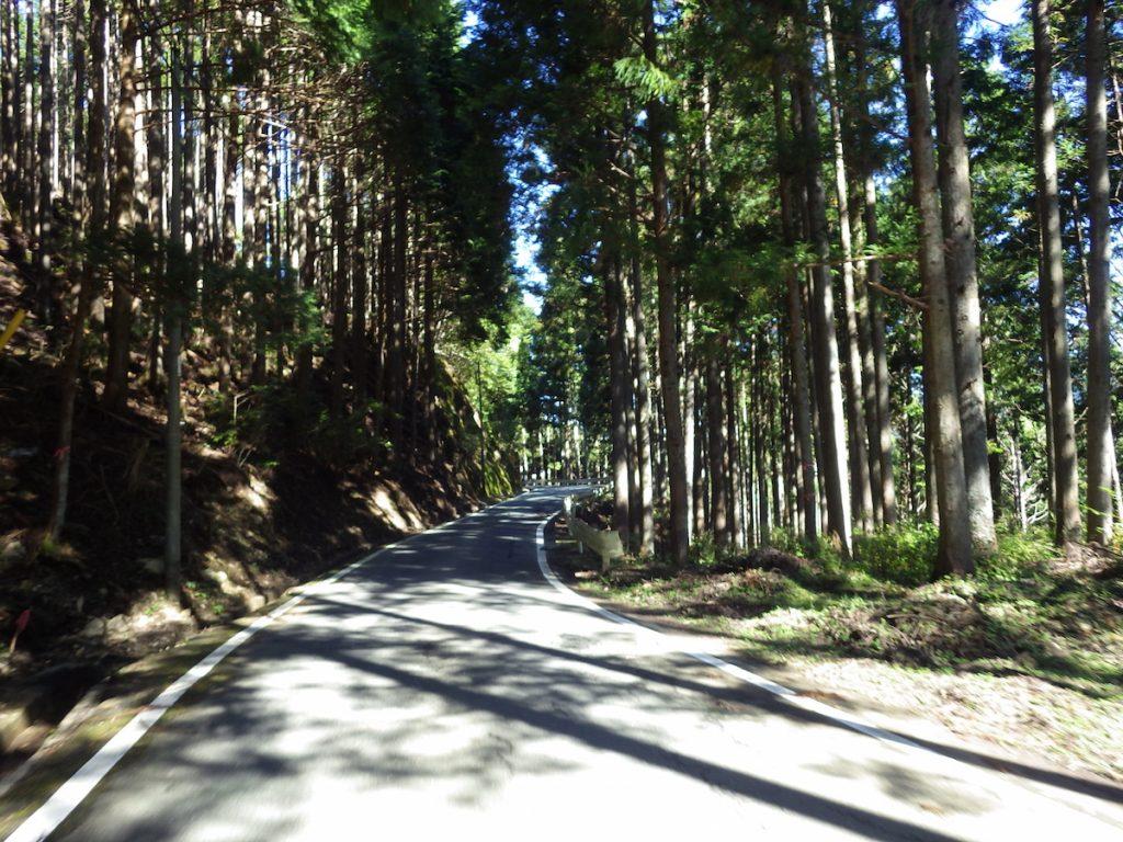 熊の集落を過ぎると木立に囲まれた涼しい道が続く 2015 BRM1003静岡200