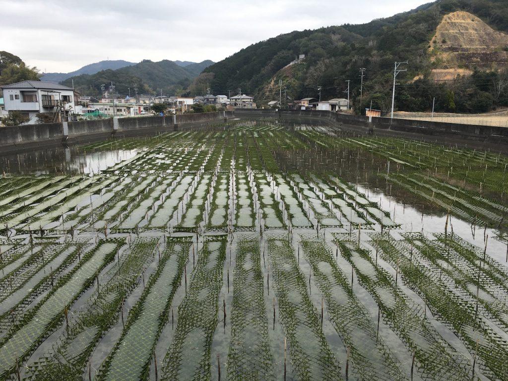 河口では海苔が養殖されていた