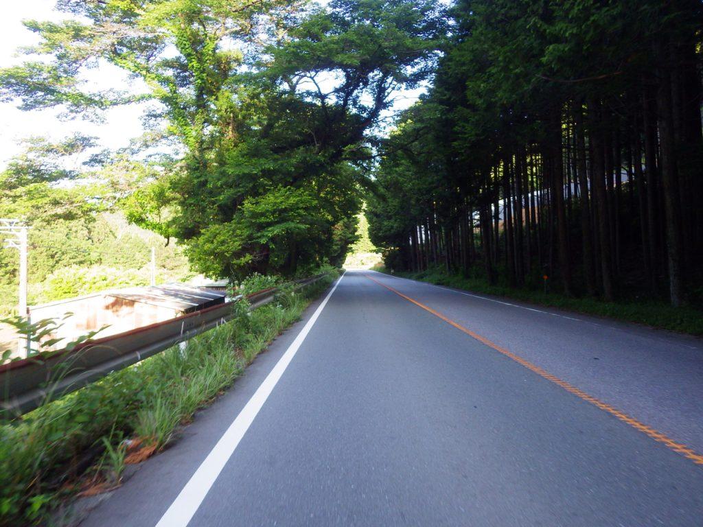 新野峠からの下り。 木立の中を進む