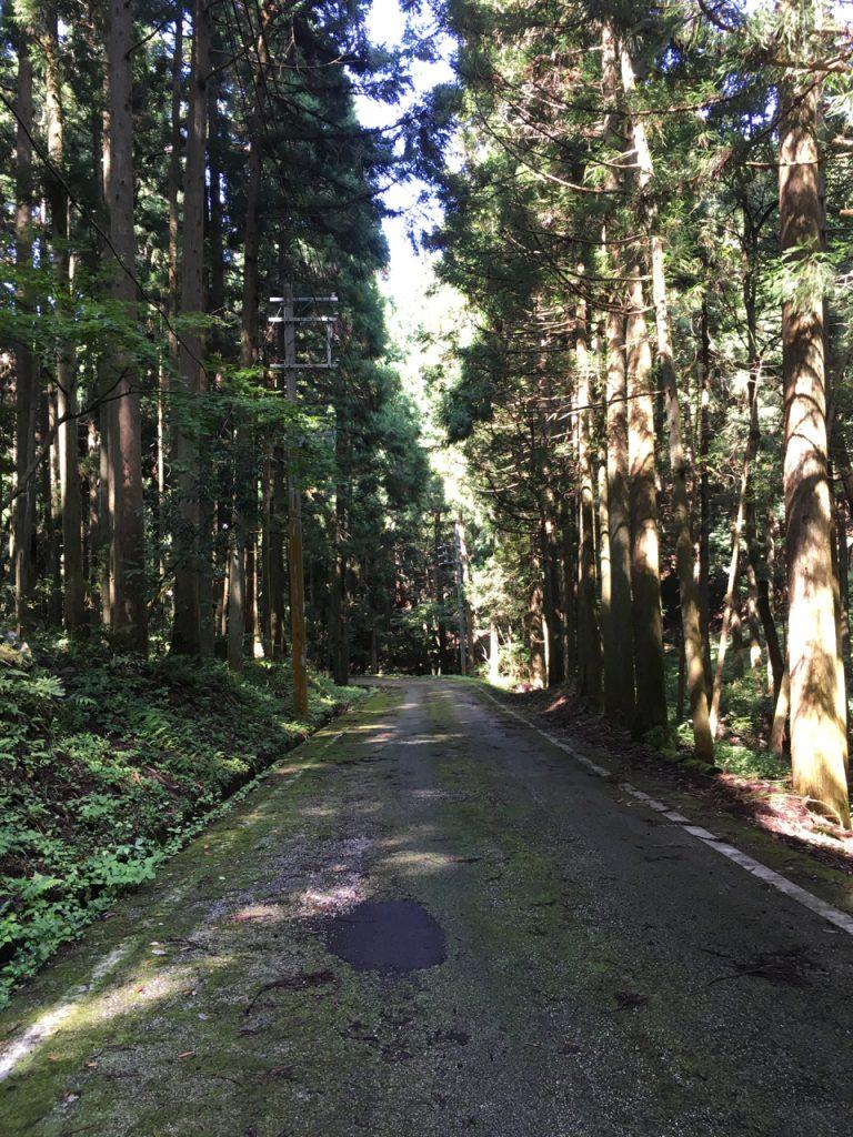 苔むした林道を通る