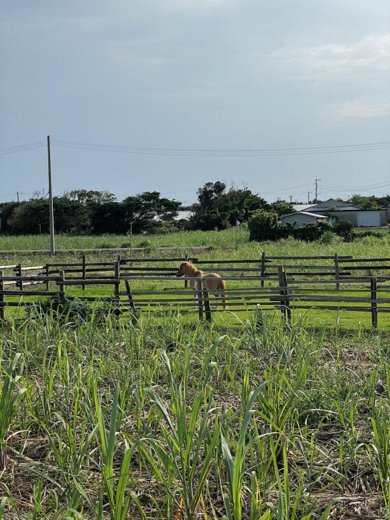 馬が囲われていた
